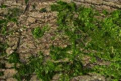 上色青苔结构树黄色 背景 纹理 库存图片