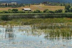 上部克拉马思全国野生生物保护区 免版税图库摄影