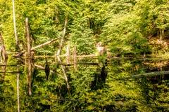 上部池塘, Kytayiv,基辅 免版税图库摄影