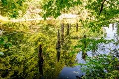 上部池塘, Kytayiv,基辅 库存照片