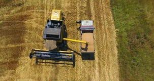 上部看法,特写镜头黄色强有力的收割机卸载在金黄麦田会集的麦子入卡车 股票视频
