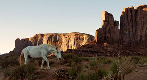 给上釉在沙漠的野生野马马 图库摄影