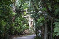 上野动物园在东京,日本 免版税图库摄影