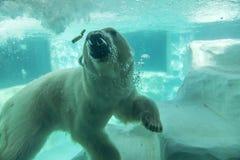上野动物园在东京,日本 免版税库存图片
