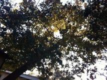 上面树 免版税库存照片