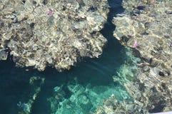 从上面的珊瑚礁 图库摄影