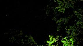 上面艺术性的天空与绿色树 免版税库存照片