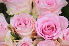 从上面被拍摄的玫瑰 免版税库存照片