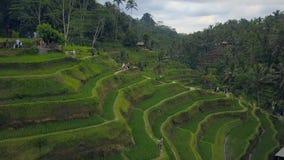上面鸟瞰图与大阳台米领域的巴厘岛风景 影视素材