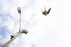 上面鹈鹕 库存照片