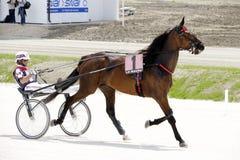 上马具的赛马比赛路线 免版税库存图片