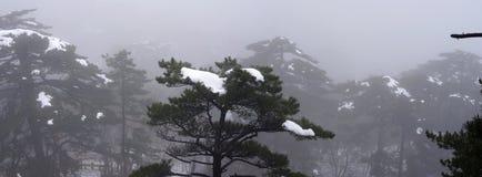 登上黄山雪 免版税库存图片