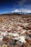 登上Ruapeho在东格里罗国家公园,新西兰 免版税库存照片