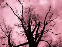 下休息日红色结构树 免版税库存图片