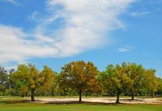 下俏丽的天空结构树 库存照片