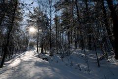 下午冬天 免版税库存照片