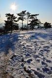 下午在积雪的飞机上的冬天太阳有弯曲的具球果杉树路和线的  免版税图库摄影