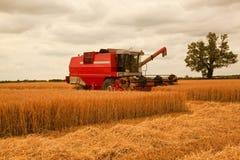 下午大麦收获 库存照片