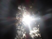 下午太阳 免版税库存图片