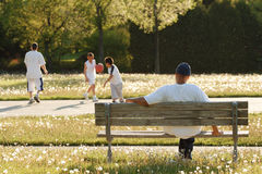 下午浮动充分的公园种子的航空蒲公& 免版税库存照片