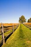 下午秋天象草的运输路线 免版税库存照片