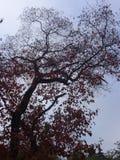 下午秋天闪光没有阳光结构树 库存照片