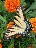 下午自然后蝶粉花的草原 免版税库存照片