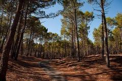 下午认为森林 库存照片