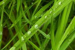 下午露水自然后草的草原 免版税库存图片