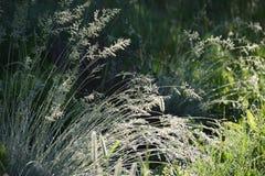 下午露水自然后草的草原 图库摄影