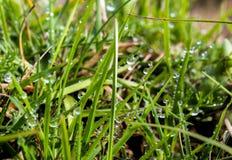 下午露水自然后草的草原 绿草 库存图片