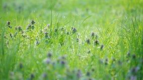 下午露水自然后草的草原 股票视频