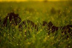 下午露水自然后草的草原 库存照片