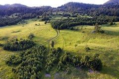 下午风景和森林 免版税库存照片