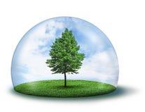 下圆顶绿色孤立防护结构树 库存照片