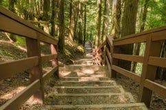 下坡森林道路 库存照片