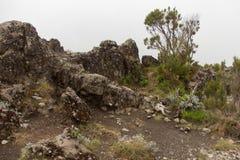 下坡从乞力马扎罗山顶  免版税库存图片