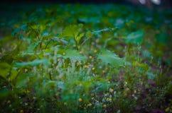 下垂的小的戴西在雨以后夜在植物名茎中的 r 在底层的射击 E 免版税库存图片