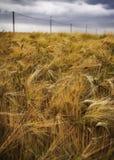 下多云严重的域黑麦天空 库存照片