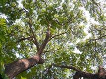 下大构成绿色本质结构树 蔓延的豪华美丽 免版税库存照片