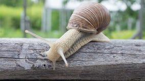 滑下大的蜗牛木板 免版税图库摄影