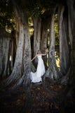 下新娘结构树 库存图片