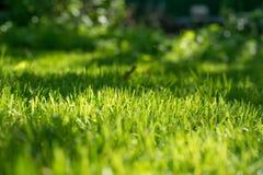 下明亮的星期日 自然抽象的背景 在草坪的新鲜的绿色春天草有选择聚焦的弄脏了bokeh 库存照片