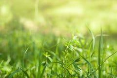 下明亮的星期日 自然抽象的背景 免版税图库摄影