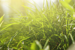 下明亮的星期日 自然抽象的背景 图库摄影