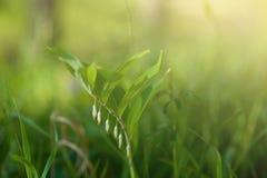 下明亮的星期日 自然抽象的背景 免版税库存图片