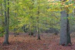 下木在秋天 库存图片
