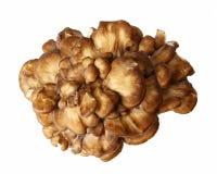 下来上面观点的Maitake蘑菇 免版税库存图片