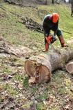 下来剁树 库存照片