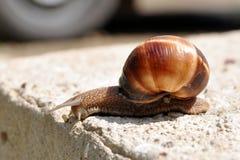 下来查找蜗牛 免版税图库摄影
